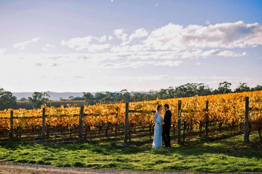 vinesoftheyarravalley-main