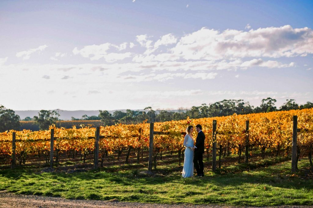 wedding-couple-at-vines-vineyard-yarra-valley-1024x681